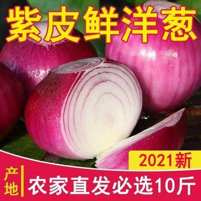 洋葱批发新鲜现挖生吃水果葱头红皮紫皮洋葱圆葱农家自种批发蔬菜