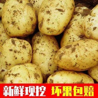 土豆新鲜批发价山东黄皮大土豆5斤10斤新鲜黄心马铃薯洋芋包邮