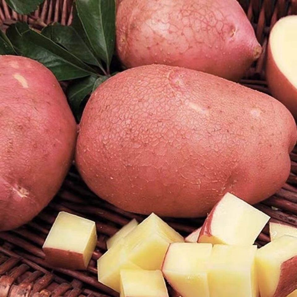 新鲜小土豆红皮黄心土豆洋芋云南小土豆马铃薯小洋芋