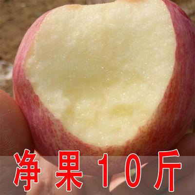 水晶红富士苹果净果10斤5斤当季时令新鲜水果整箱批发脆甜多汁吃