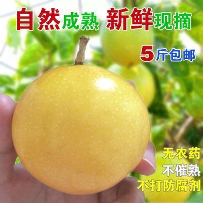 百香果当季新鲜水果黄金黄色皮百香果鸡蛋果甜西番莲果包邮芭乐味